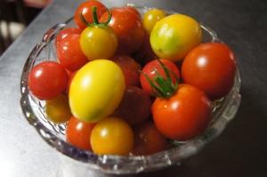 じいちゃんと孫のミニトマト